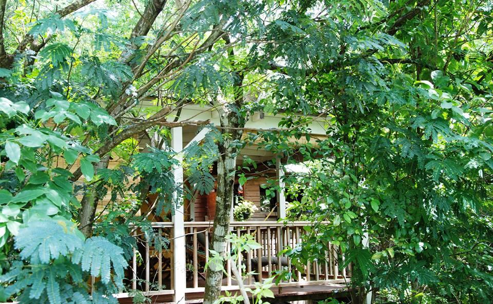 Au jardin des colibris deshaies guadeloupe for Au jardin des colibris deshaies guadeloupe